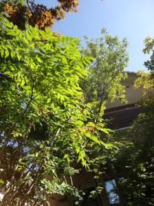 秋の空と雑木