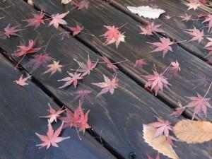 紅葉おしまい